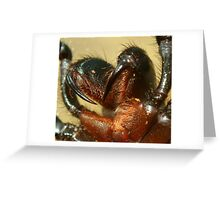 funnel web Greeting Card