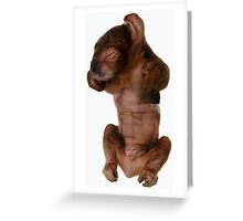 Young Koala Greeting Card