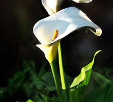 Sun-Kissed Lilly 2 by Emma Moss