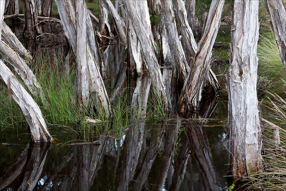 Paper-bark reflections, North-east Tasmania by pfleur