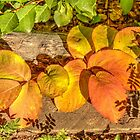 August Leaves by Jim Sauchyn
