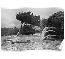 trees at Jenkins' Point Poster