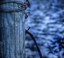 Barbed Wire in Blue by Christine Annas