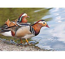 Male Mandarin Ducks at Martin Mere Wetland Centre Photographic Print