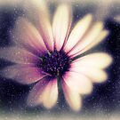 Dare To Dream...of Daisies  by Vanessa Barklay