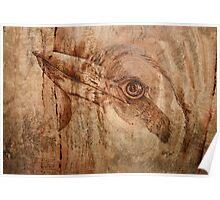 Proud Kookaburra Poster