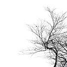 Winter birch by Bluesrose