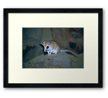 Cute Dunnart Framed Print