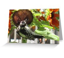 Woodpecker Eating Sunflower Seeds in Mo's Garden 3 Greeting Card