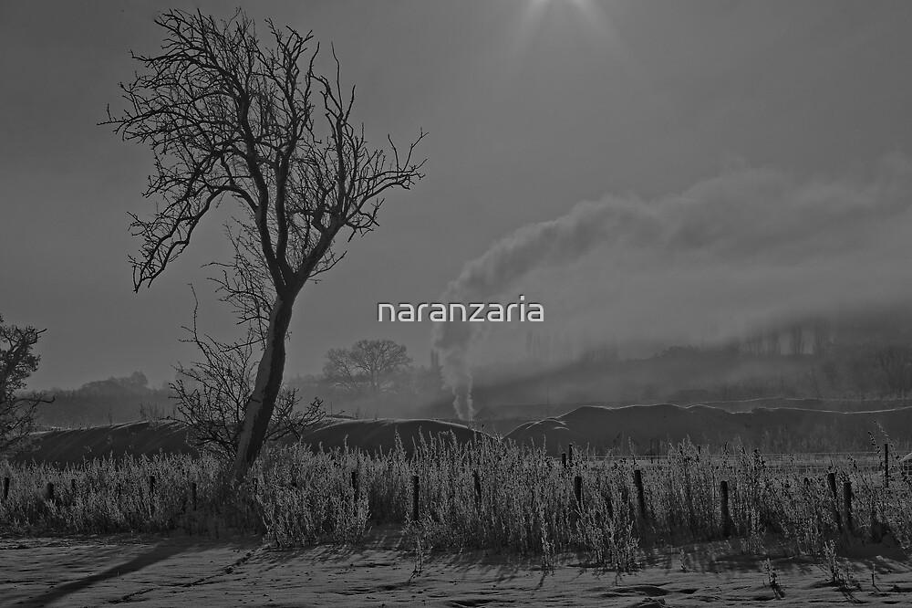 Snow scene, in black and white.  by naranzaria