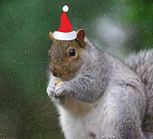 Squirrel Elf by Karen Checca