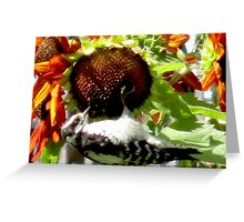 Woodpecker Eating Sunflower Seeds in Mo's Garden 2 Greeting Card