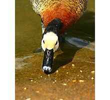Birdseed Photographic Print
