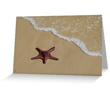 Starfish, Moreton Island QLD Australia Greeting Card