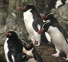 Cool Snares Penguin by cute-wildlife