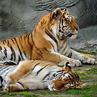 Cute Tigers by Usha Ganesh