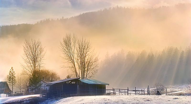 Morning Glory by John Poon