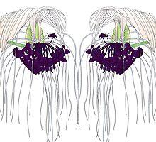 White Bat Flower by OrangeEden