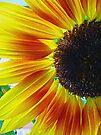 Sunflower by FrankieCat