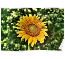 SUNFLOWERS FOR WISHES Poster