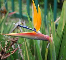 Bird of paradise flower by dizzyshell42
