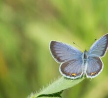 Eastern Tailed Blue Sticker