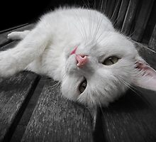 Just Chillin' by Sally Green