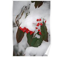 Red Berries Poster