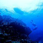 Divers descending reef wall / Emma M Birdsey by Emma M Birdsey