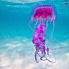 Mauve Stinger Jellyfish, Coogee Beach / Emma M Birdsey by Emma M Birdsey