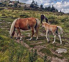 Wild Ponies  by PaulWilkinson