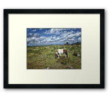 Grayson Highlans, Virginia Framed Print