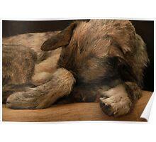 Do Dogs Dream Poster
