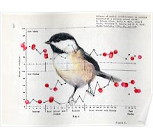 Chickadee and Berries Poster