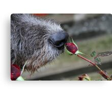A Nose and a Rose Canvas Print