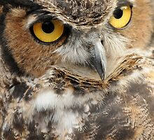 Great horned owl,  Howell Nature Center by Mary Westhoff