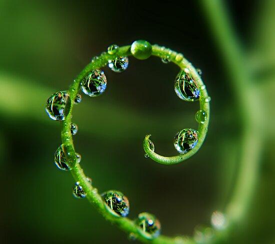 Rain Spiral by BobbiFox