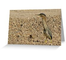 Green Heron (Juvenile) Greeting Card