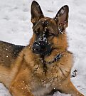 Chance - Snow Dog by Sandy Keeton