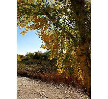 Autumn in Arizona Photographic Print
