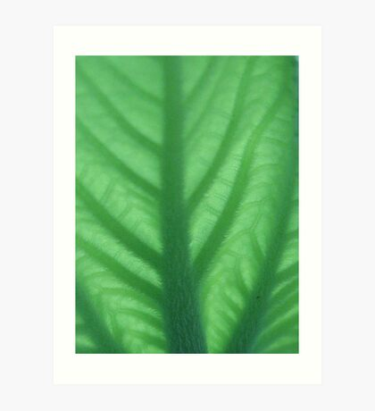 The green leaf series! Art Print