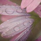 Purple Rain by Edge-of-dreams