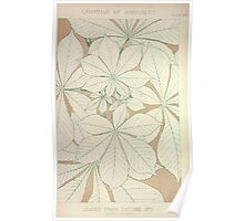 The Grammar of Ornament Owen Jones Francis Bedford Joh Burley Waring John Obadiah Westwood 1856 0303 Leaves from Nature Poster