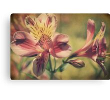 The Very Thought of You Canvas Print