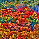 Fall Colours by ZeeZeeshots