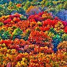 Fall Colours by ZeeZeeshots
