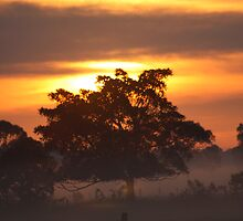 Sunrise of Oxley #2 by Jodie Cooper