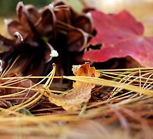 Pinecone and Maple Leaf by PixyKatStudios