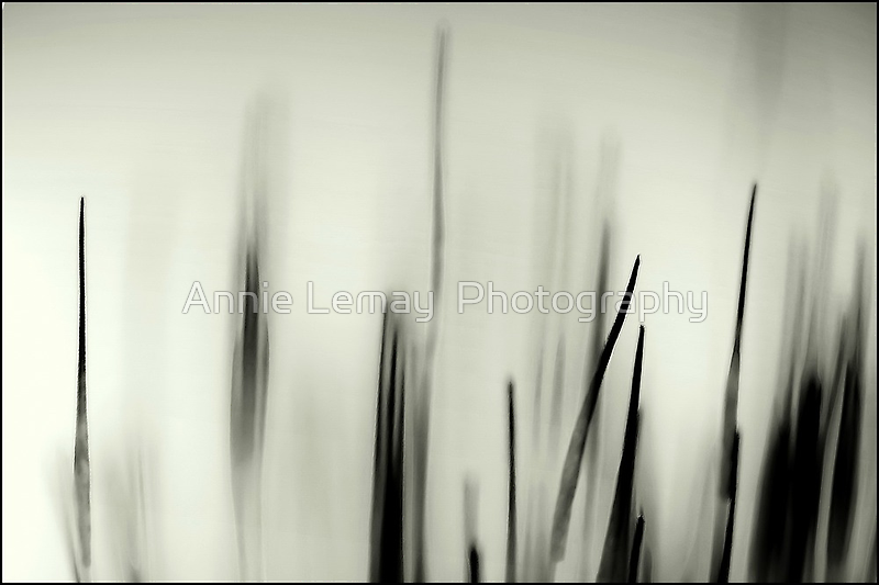 Abstract Moss by Annie Lemay  Photography
