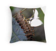 Cairns Birdwing Caterpillar Throw Pillow